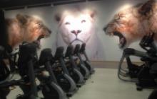 Vinilos y paneles 3D en Madrid - vinilo gimnasio - Pinturas Cobalto